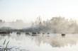 Landschaft an einem Moos See mit Nebel im Morgengrauen im Frühherbst