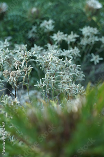 Türaufkleber Darknightsky Alpine meadow garden