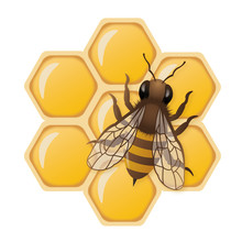 3D Honey Bee Illustration On H...
