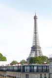 Fototapeta Wieża Eiffla - Old buildings with trees on the roof in front of the Eiffel Tower in Paris