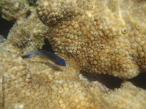 Submerged colony of the white encrusting zoanthid Palythoa caribaeorum from Porto de Galinhas, Pernambuco, Brazil Canvas Print