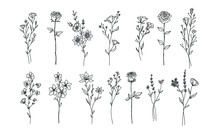 Nature Floral Illustration Vec...