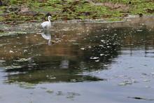 Oiseau Sur Plage De L'Océan.