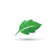 green leaf vector isolated white background,