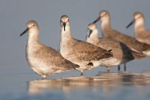 A Flock Of Shorebirds Rest In ...