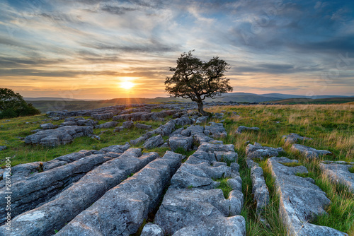 Fotografering Sunset over a lonely windswept Hawthorn tree on a limestone pavement