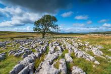 A Lone Ash Tree On A Limestone...
