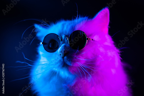 Obraz na plátně Stock video Portrait of white furry cat in fashion eyeglasses