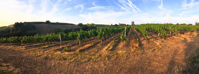 Vue panoramique sur les vignes en France