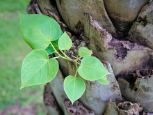 The Small Plant Are Growing Ou...