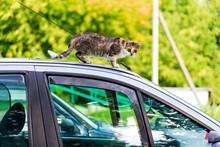 A Cat On The Car, A Homeless C...