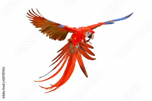 Scarlet macaw isolated on white background. Wallpaper Mural