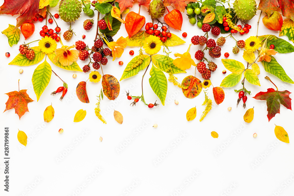 Fototapety, obrazy: Autumn composition made of flowers,leaves, berries on white background. Autumn concept for Thanksgiving day or for other holidays. Flat lay.