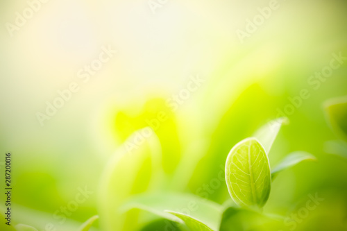 Foto auf Gartenposter Gelb Closeup nature view of green leaf on blurred greenery background in garden with copy space using as background natural green plants landscape, ecology, fresh wallpaper concept.