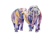 A Pair Of Indian Elephants. Watercolor Image.