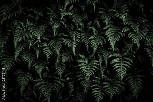 Green leaves texture background, Natural background and wallpaper