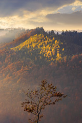 Obraz na Szkle Góry autumnal mountain scenery at foggy sunrise. lonely tree in the foreground. cloudy weather, forests in fall foliage