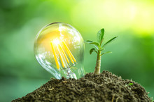 Little Tree Growing On Soil With Light Bulb For Save Energy Or Environment Protection. Creative Ideas To Eco Friendly Of Earth Day