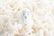 ふわふわな毛糸と羊の...