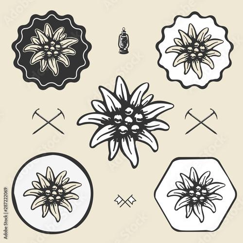 Fototapeta  edelweiss flower alpinism vintage icon flat web sign symbol logo label
