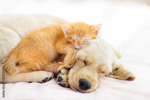 Cadres-photo bureau Chat Cat and dog sleeping. Puppy and kitten sleep.