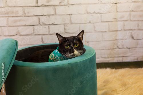 Black cat peeking out of a ottoman