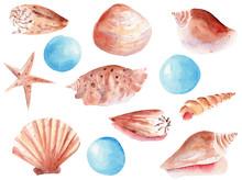 Seashells And Pearls Hand Draw...