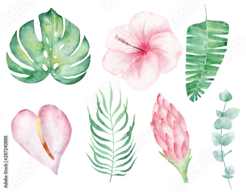 Photo Tropical flowers hand drawn watercolor raster illustration set