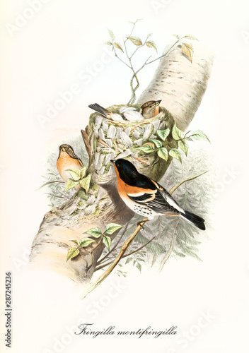 Canvas Print Three little birds and their nest on part of a trunk over little vegetation in background
