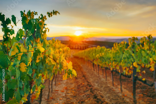 Keuken foto achterwand Wijngaard Beautiful sunset over vineyards.