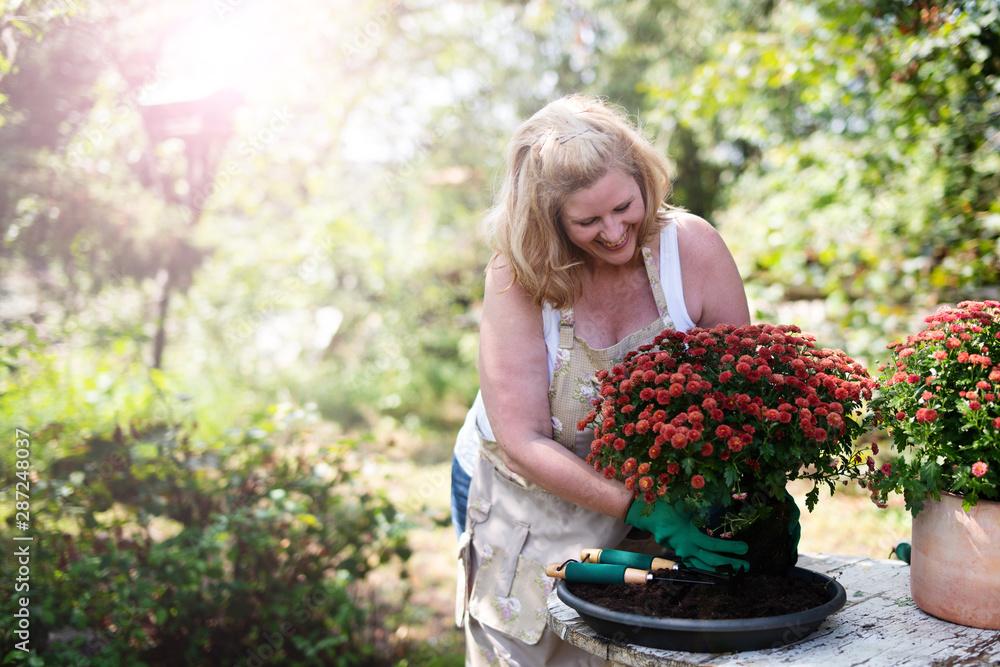 Frau freudig bei der Gartenarbeit mit Blumen, chrysanthemen