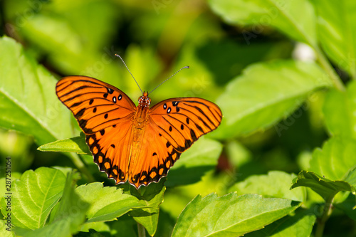 Orange butterfly sitting on some green leaves