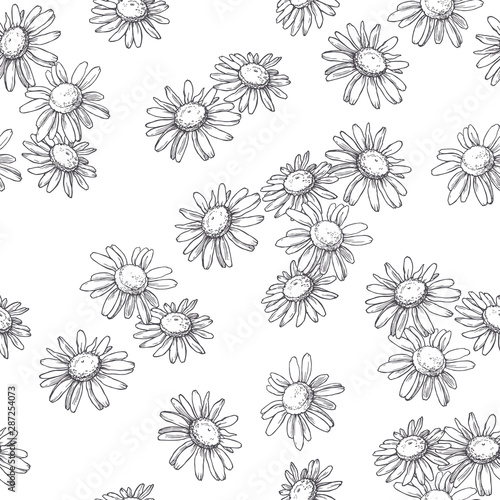 vector-seamless-pattern-with-chamomile-flowers-in-engraving-style-hand-drawn-botanical-texture-floral-sketch