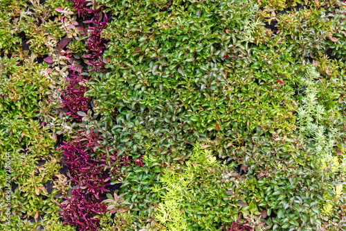 landscape of violet purple and green plants in a flower composition