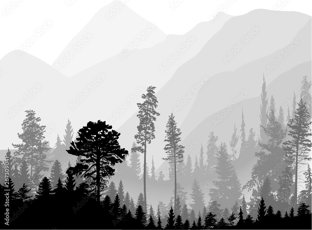 Fototapety, obrazy: dark fir forest in grey hills isolated on white