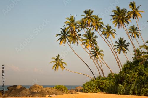 fototapeta na lodówkę Beautiful beach with palm trees and boulders on the tropical island of Sri Lanka.
