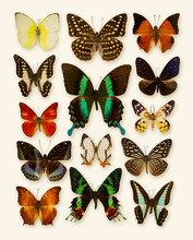 Butterfly Collection Isolated