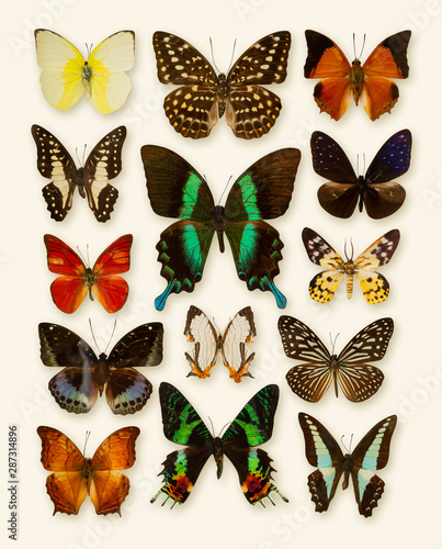 Fotografie, Obraz  Butterfly collection isolated