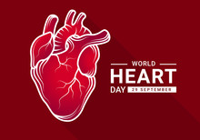 World Heart Day With Gradient Red Human Heart Real And White Outline Drawing Sign On Dark Red Background Vector Design