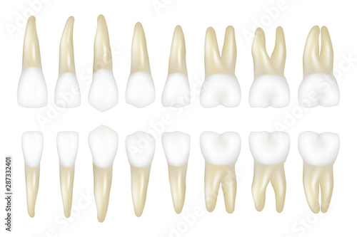 Fotomural Type tooth