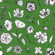 canvas print picture Floral Seamless Pattern Black and white hand drawn illustration in realistic style. Small graceful plants with black contour isolated on green. Can be used for invitation cards, banners, flyers.