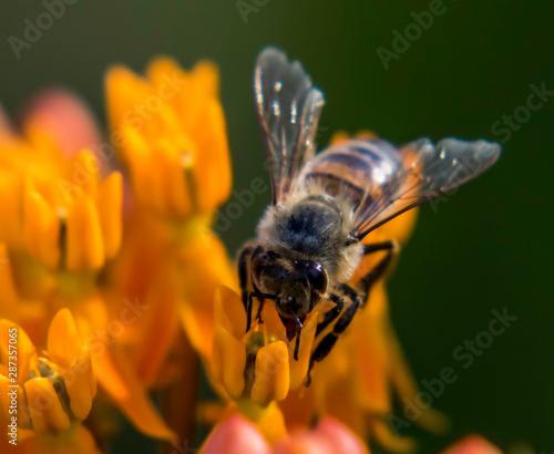 bumble bee on a yellow flower