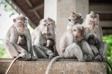 Monkey Family Is Sitting On Th...