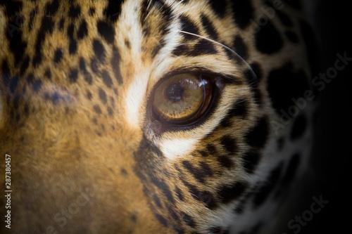 L'oeil du jaguar Tableau sur Toile