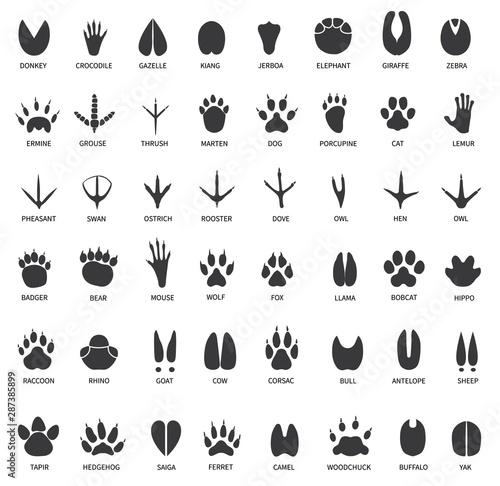Photo  Animal tracks