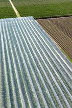 Orchard Wih Hail Nets. Flevopo...