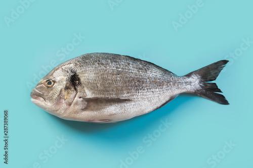Fototapeta  One dorado on pastel blue. Fish pattern. View from above.