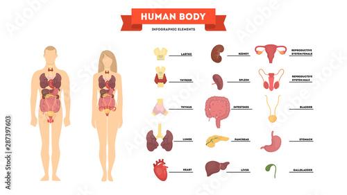 Fotografía Human anatomy concept. Female and male body