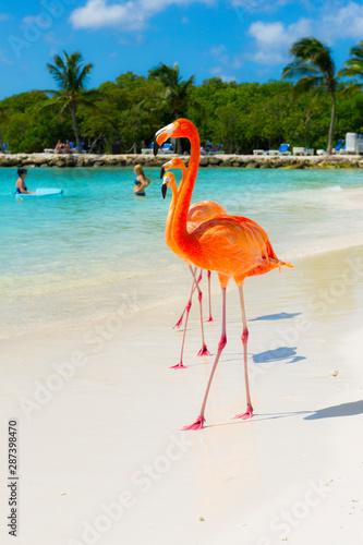 Garden Poster Flamingo Pink flamingo on the beach from Aruba