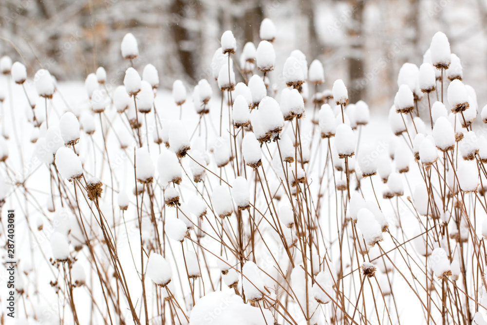 Fototapety, obrazy: snow covered plants in a winter garden
